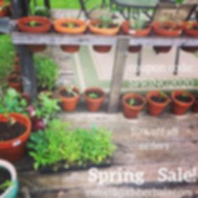 Spring Sale!.jpg
