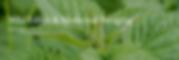 Screen Shot 2020-06-15 at 8.09.25 AM.png