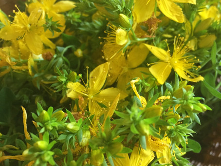 Herbs for Seasonal Affective Disorder