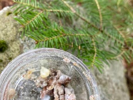 Pine Resin Uses & Salve Recipe
