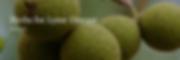 Screen Shot 2020-06-15 at 8.09.07 AM.png