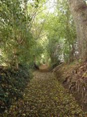 Charmant chemin conduisant à la maison, gîte de charme normandie calvados, la Blanchetière