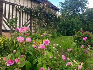 La_Blanchetière_jardin_la_roseraie_en_