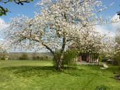 Le cerisier en fleurs, la Blanchetière gîte de charme en Normandie Calvados