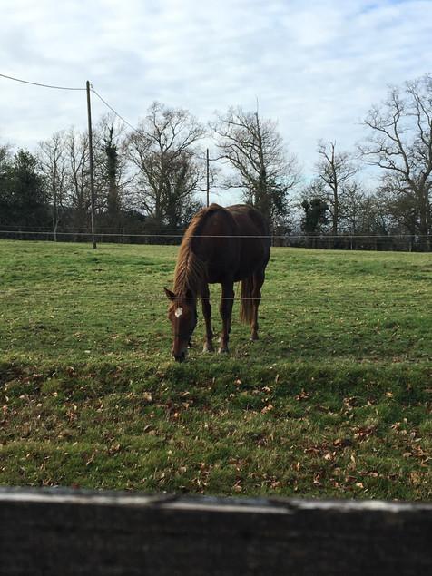 Une pension pour chevaux sur le terrain voisin, la Blanchetière gîte de charme normandie calvados