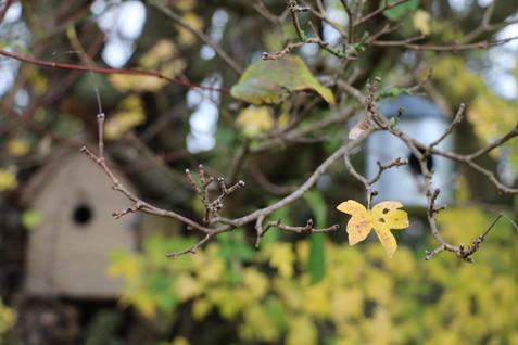 La Blanchetière offre gîte et couverts à nos petites boules de plumes - gîte charme normandie calvados