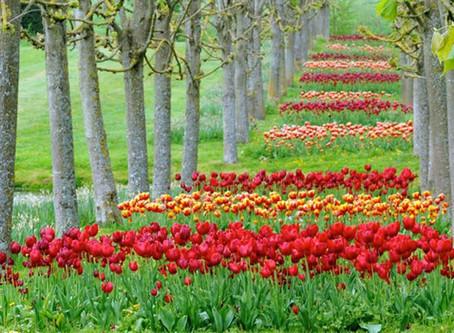 Le festival 2019 de la tulipe au château de Vendeuvre