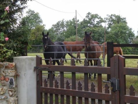 Les chevaux de la pension voisine, gîte charme normandie calvados, la Blanchetière