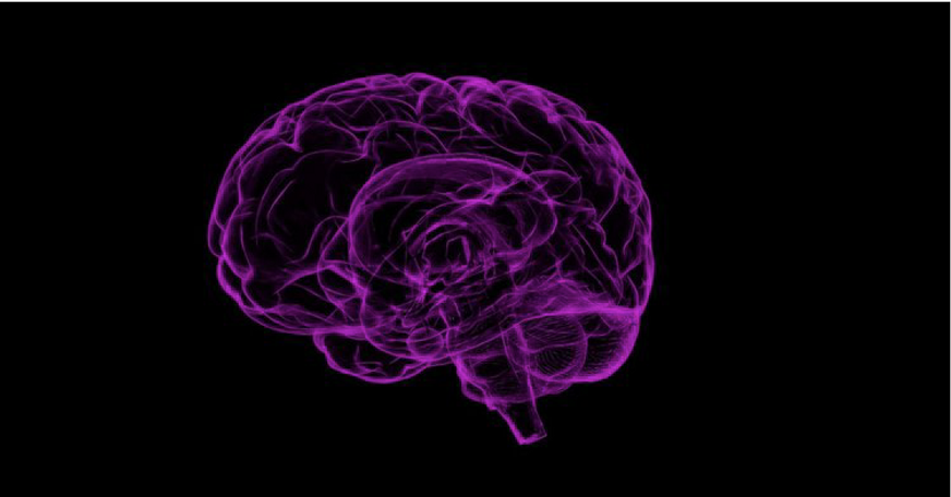 6 steps to power up your brain-en