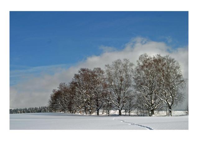 winter am dellenfeld.jpg