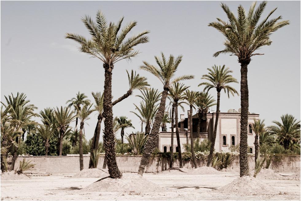 marrakech 13 - la palmeriae.jpg