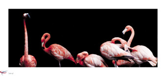 flamingos #1.jpg