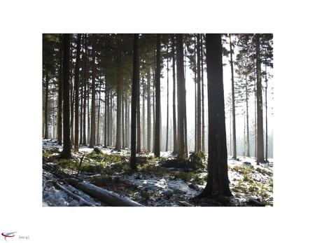 lichterwald.jpg