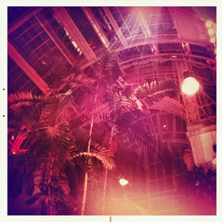 wien 17 - brasserie palmenhaus.JPG