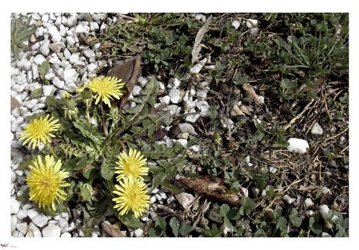 spring brings back the color.jpg