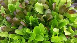 Tapestry Salad Mix