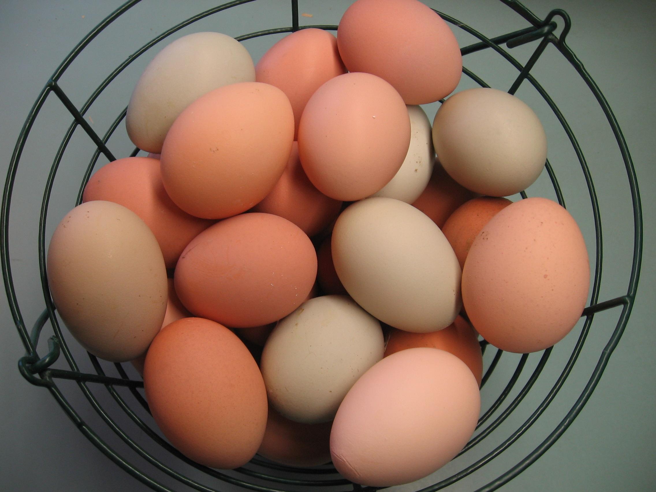 Eggs - 100