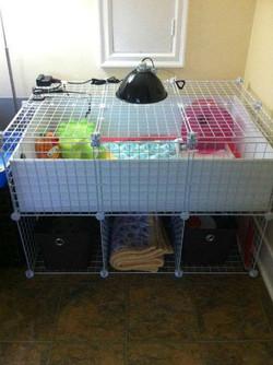 C&C cage