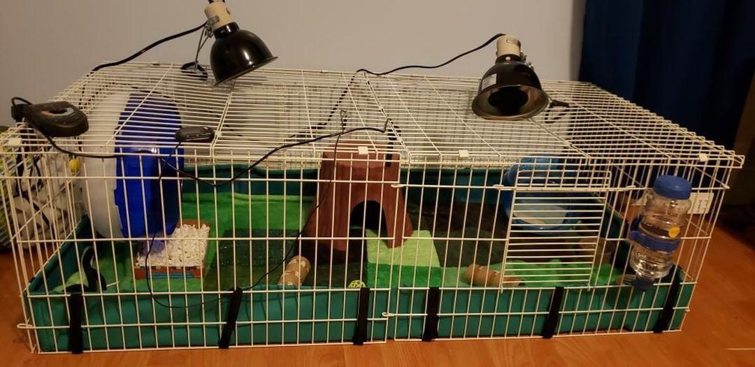 Midwest Guinea Pig Habitat Plus