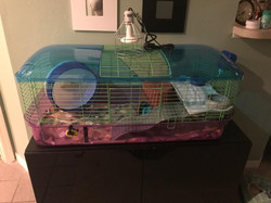Kaytee Extra Large Critter Home
