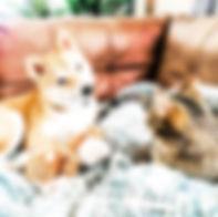 Mochi_Miso_Loving_Gaze.jpg