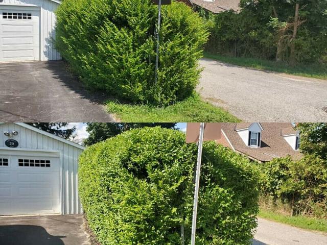 bush_trimming_port_credit.jpg