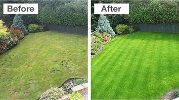 Lawn Treatment.jpg