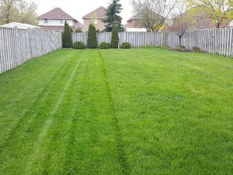 lawn_maintenance_cooksville.jpg