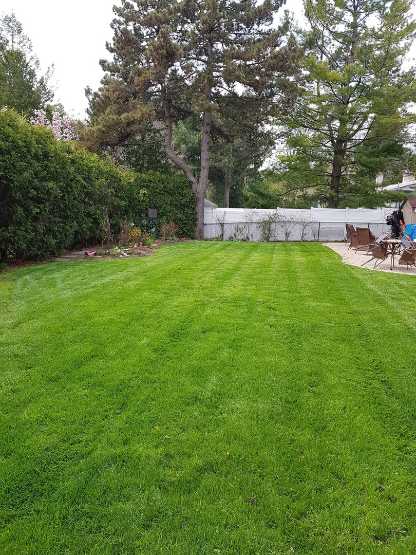 Freshly cut lawn in mississauga