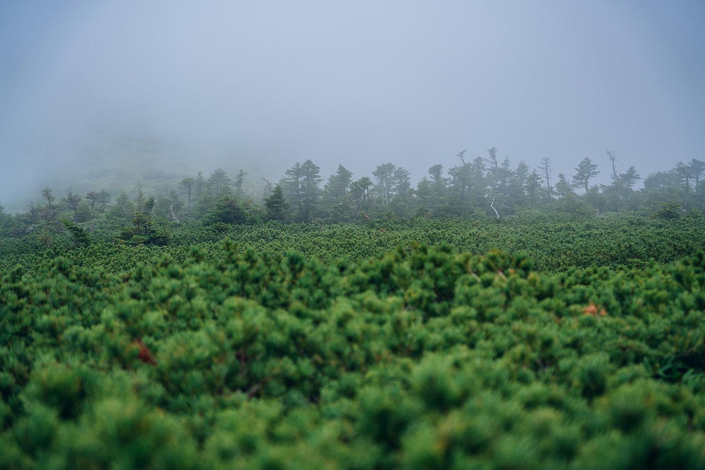 風景写真家 風景写真 フォトジャーナリスト