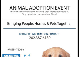 Animal Adoption Event: Bringing People, Homes & Pets together!
