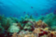 Trinidad and Tobago Reefs Photo.jpg