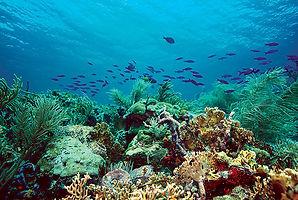 Trinidad and Tobago Reefs Photo.jpg