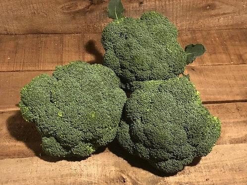Broccoli (medium Head)