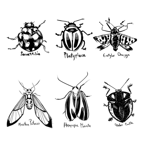 Bugs Plain