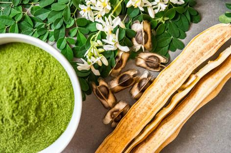 Moringa Oleifera: fresh leaves, dried leaves powdered, dried seeds and bark of dried fruits