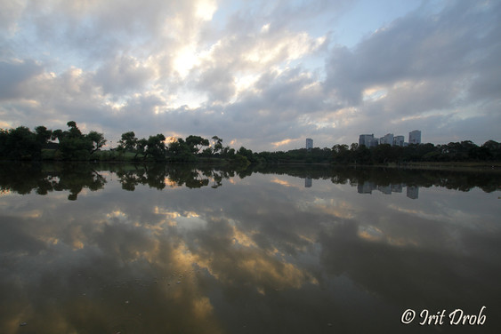 urban nature - Reflection - water and trees