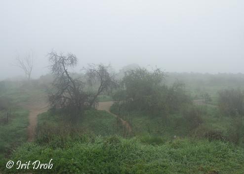 Fog in the Hyarkon Park, Tel Aviv city