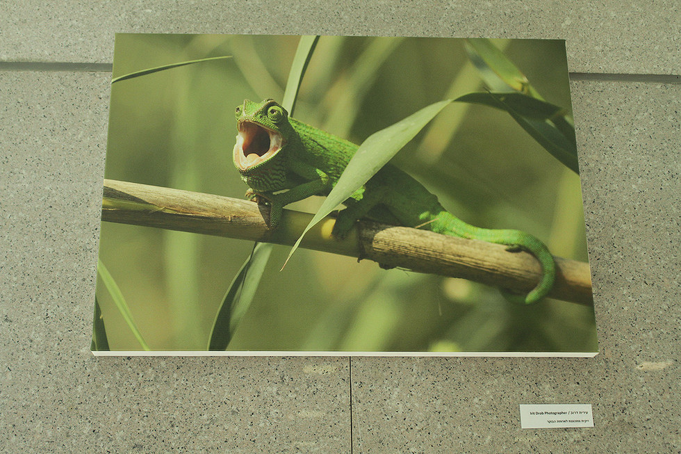 """Sole exhibition """"Yarkon park – A vanishing urban nature"""". In the Government Offices Compound (2019)"""