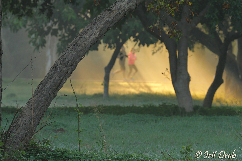 urban nature -trees and people
