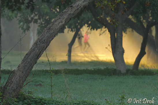 Urban nature - trees & people in the park