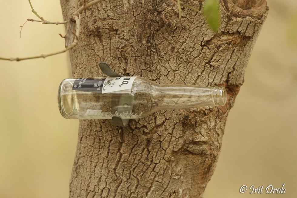 Glass bottle on a tree