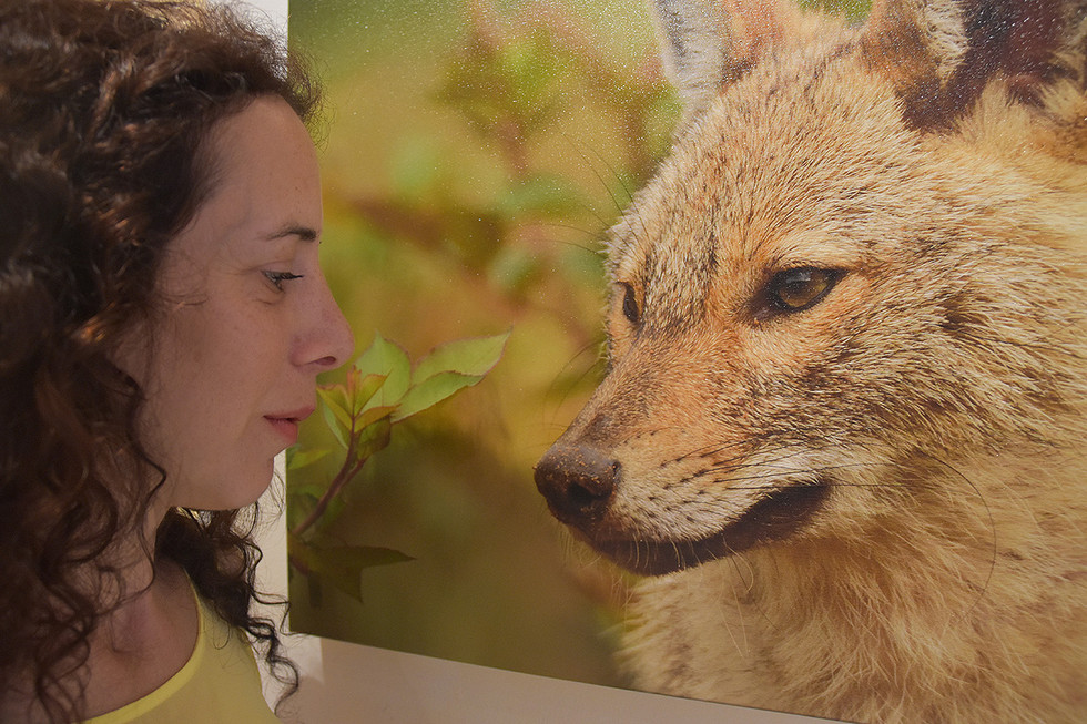 """Sole exhibition """"wild nature in the big city - Yarkon park"""". Took place in Yahalom Theatre Sponsored by Ramat Gan Municipality Department of the Veterinary – Shefa (2017) / photo by Ruth Gal"""