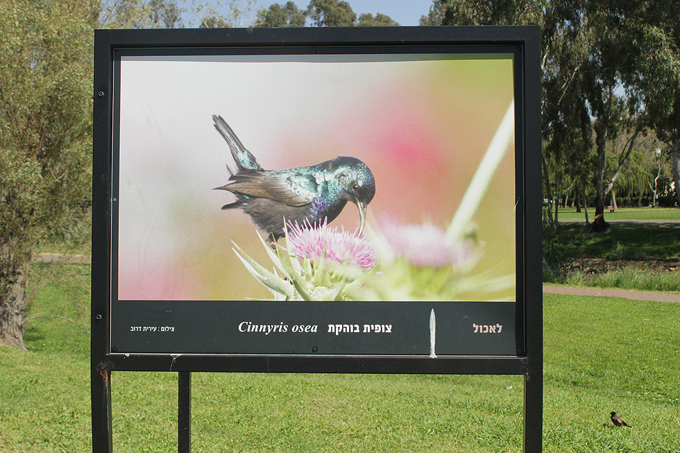 """Participating in a shared exhibition about """"urban nature in Yarkon park"""" - Sponsored by Yehoshua Gardens (2018-2019)"""
