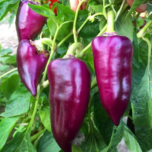 Oda Pepper