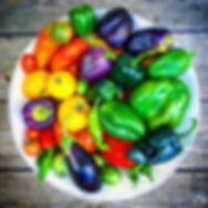 Beautiful plate of organic, heirloom vegetables grown at Carmel Bella Farm