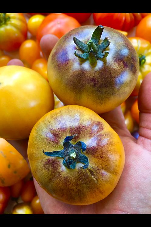 Blue Sun (rare tomato)