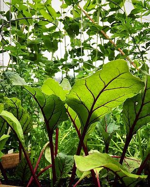 Healthy young plants grown at Carmel Bella Farm