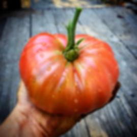 Heirloom tomato photo art from Carmel Bella Farm