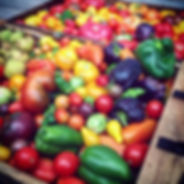 Organic heirloom tomatoes and vegetables grown at Carmel Bella Farm